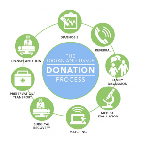 the procedure of the live organ donation transplantation What to expect as a living donor there are several phases in the donation process at the johns hopkins comprehensive transplant center, organ donors are given.