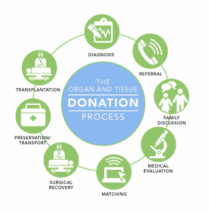 Organ and Tissue donation Process