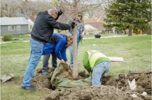 Mike Blonigen plants a tree in honor of his donor